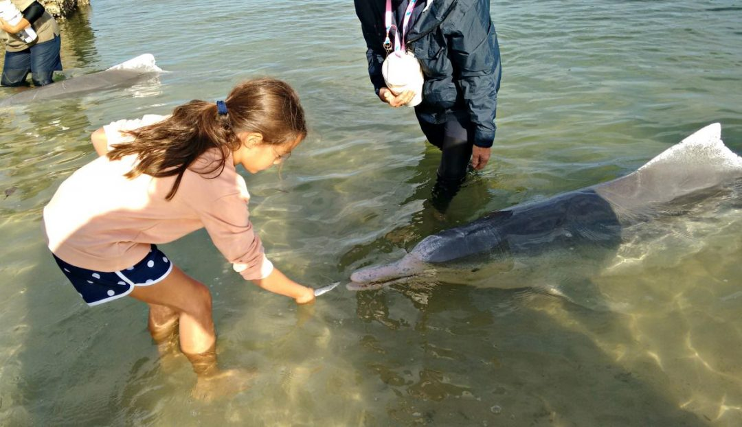 Feeding wild dolphins at Tin Can Bay