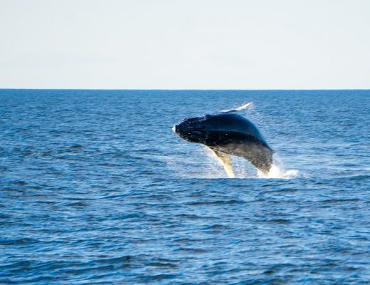Top spots to go whale watching on the Sunshine Coast