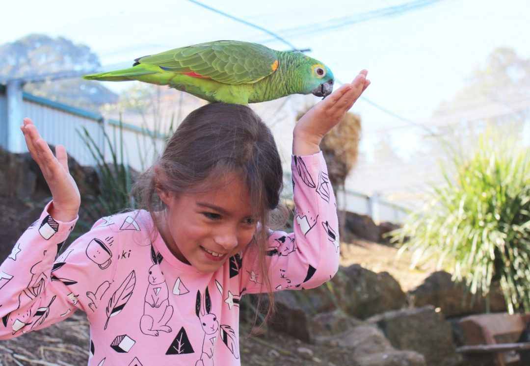 Birds at Maleny Bird World