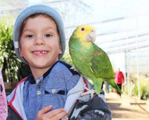 Maleny Bird World
