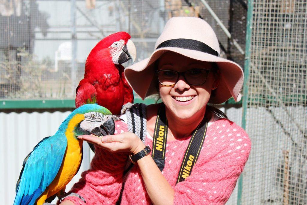 Macaws at Maleny Bird World