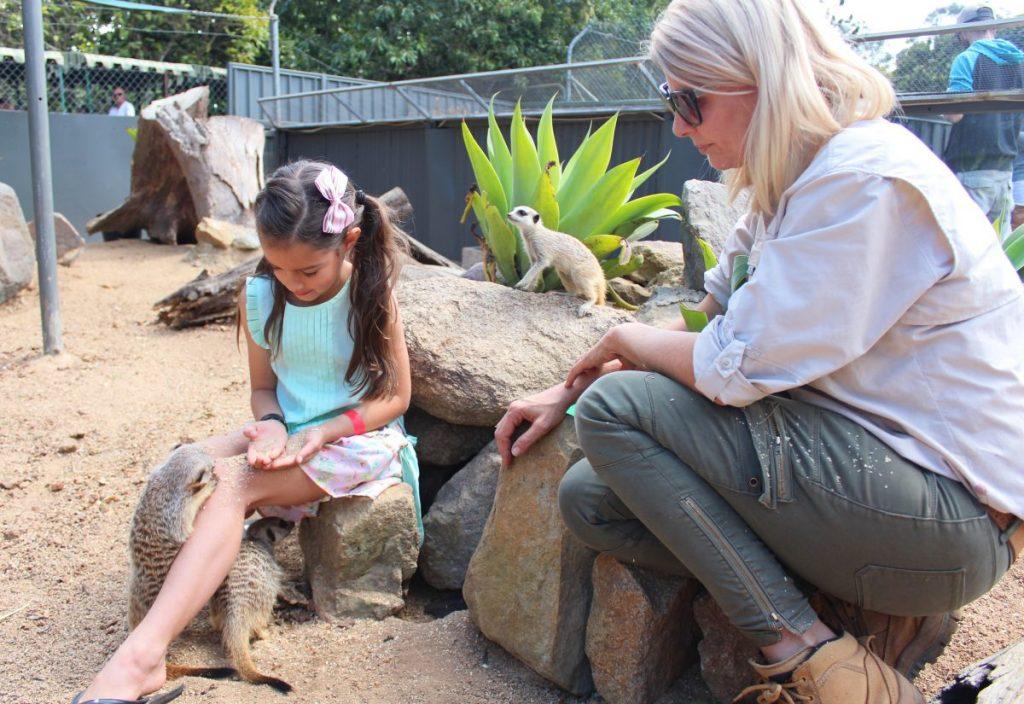 Feeding the Meerkats at Wildlife HQ