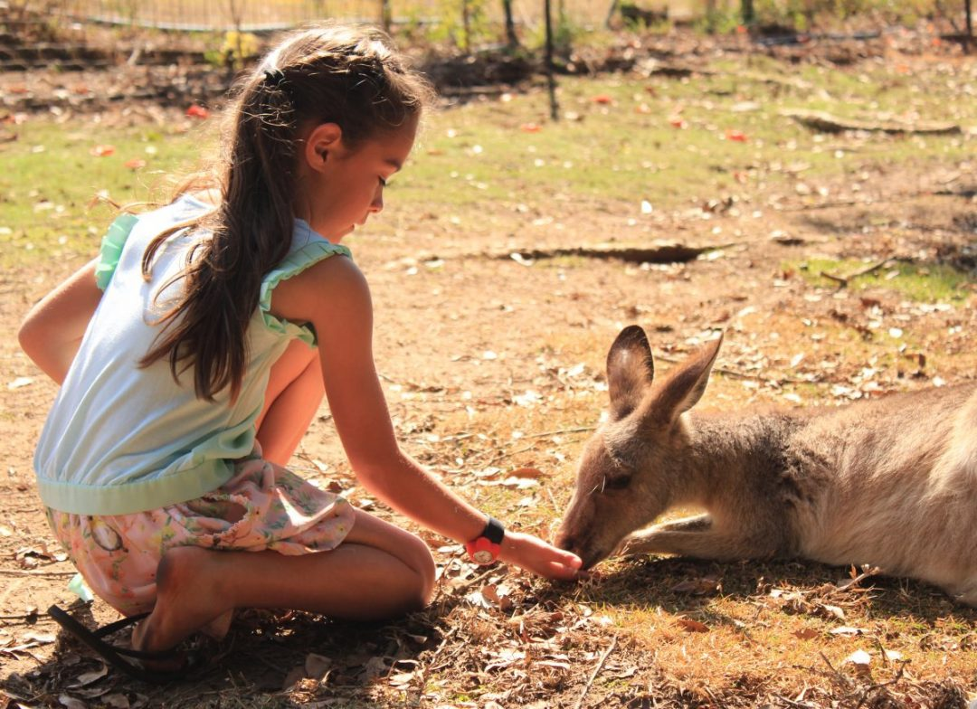 Feeding a kangaroo at Wildlife HQ Zoo