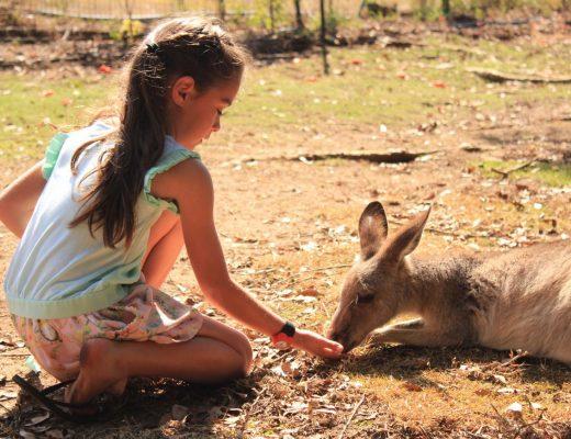 Feeding a kangaroo at Wildlife HQ Zoo