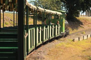 The Big Pineapple Train to Wildlife HQ Zoo