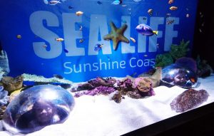 SeaLife Sunshine Coast