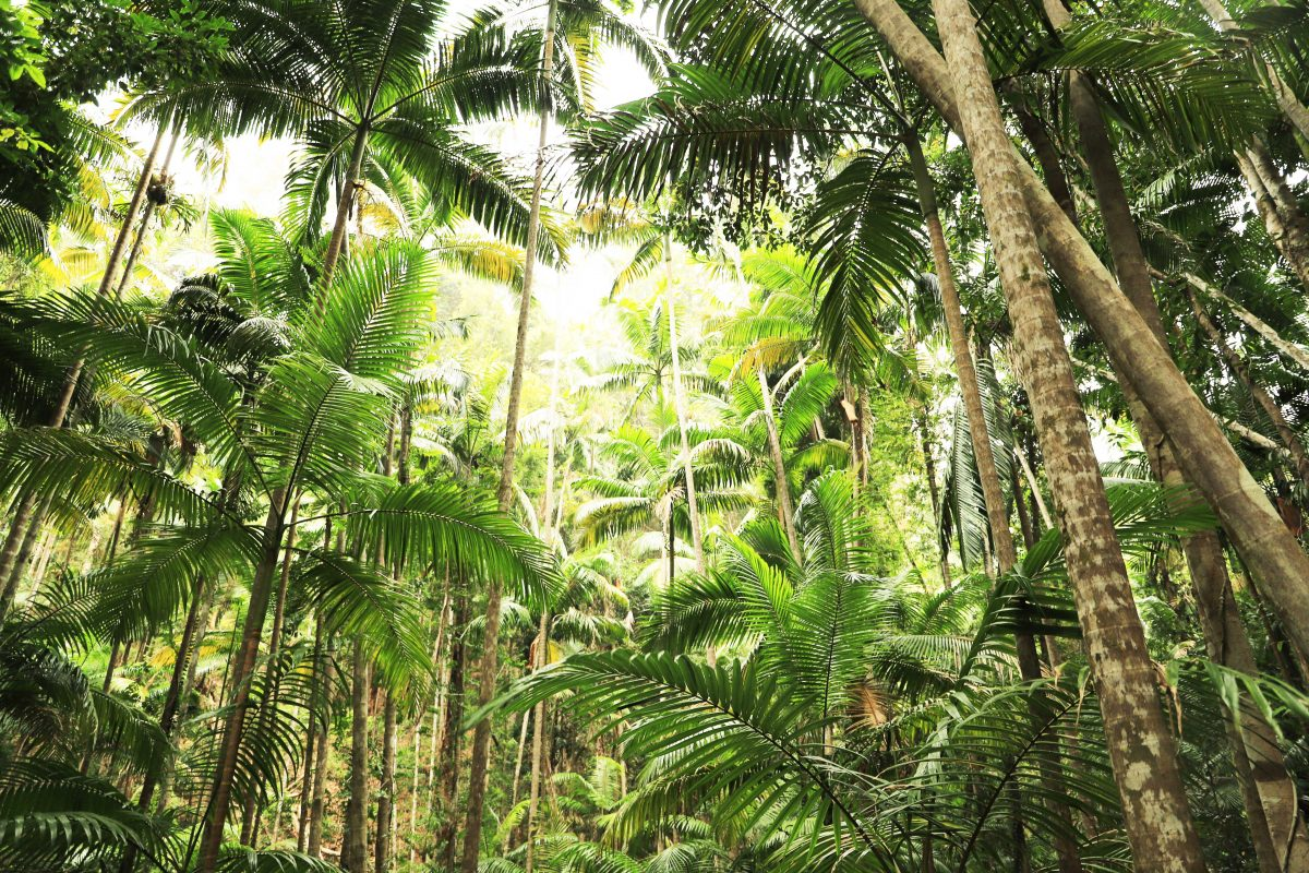 Fraser Island: Rainforest