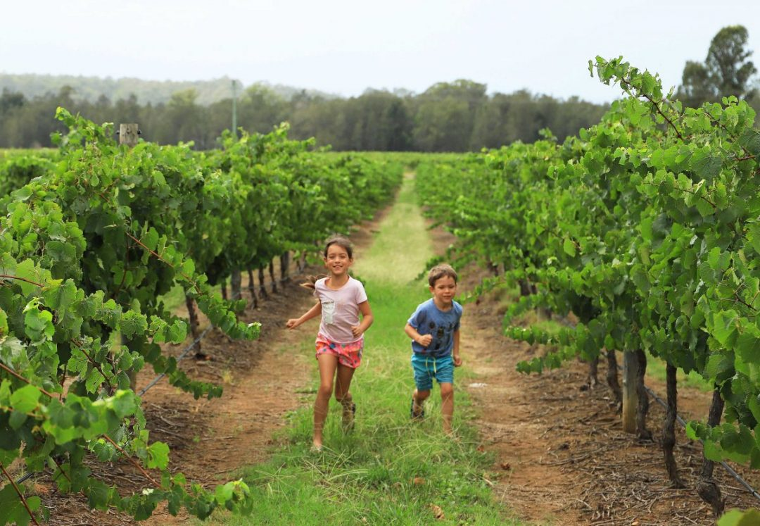 Fun in the vines in the Hunter Valley
