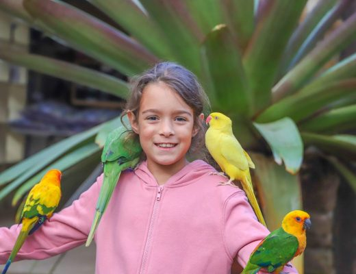 Meeting the 'locals' at Maleny Botanic Gardens and Bird World.