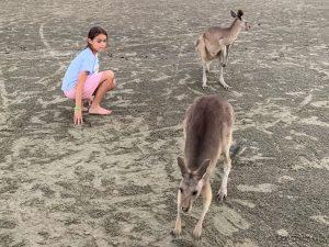 Upclose with the kangaroos at Cape Hillsborough