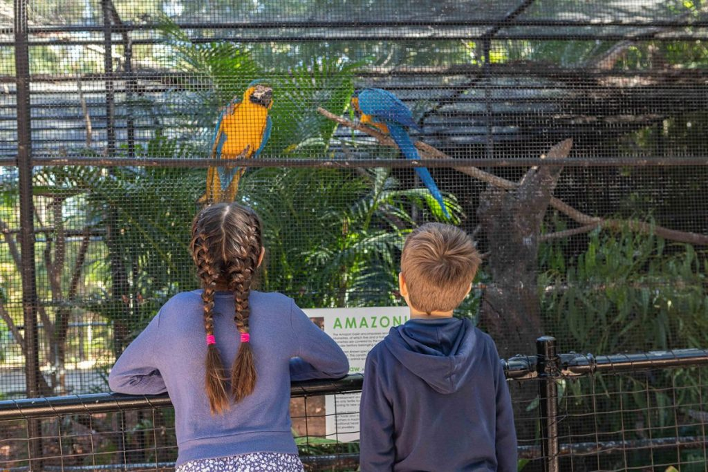 Colourful macaws